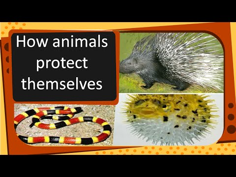 Science - How animals protect themselves - English