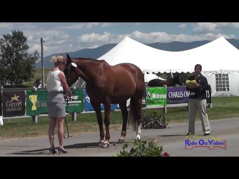211J2 Ione George On G Salsa T3D FEI Jog 2 The Event At Rebecca Farm July 2014