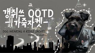 Eng Sub) 강아지 ootd_ 가죽자켓편 | 멋진 …