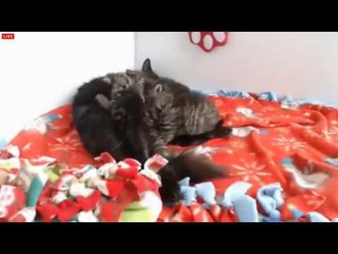 Tiny Kittens More bottle feeding and exposure to wet fudz