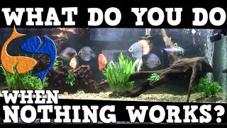 Guaranteed Way To Solve Every Problem In Your Aquarium! Let's Start Over! KGTropicals!