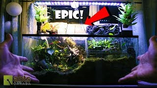 THE CRAZIEST ANT FARM I