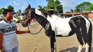 YEOLA HORSE MARKET_Video-8 Maharashtra