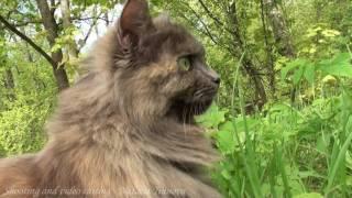 прогулка кота интересное видео
