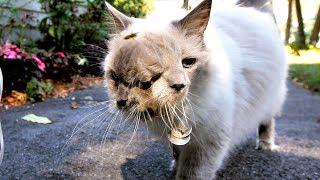 Kleiner Januskater sollte eingeschläfert werden, denn der Tierarzt glaubte nicht an Wunder!