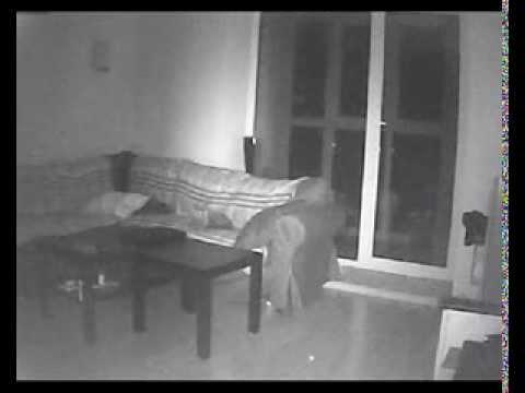 Cats See Ghosts ( кошки видят призраков )