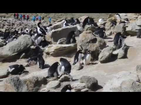 New Island - Falkland Inseln