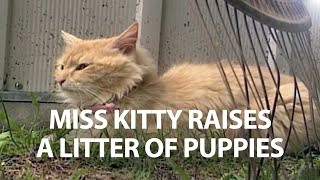 Miss Kitty Raises a Litter of Puppies  It's a Miracle