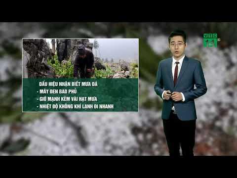 VTC14   Thời tiết 6h 13/03/2018  Hà Nội, mưa, mưa nhỏ sương mù âm u nhiệt độ từ 16 đến 19 độ.