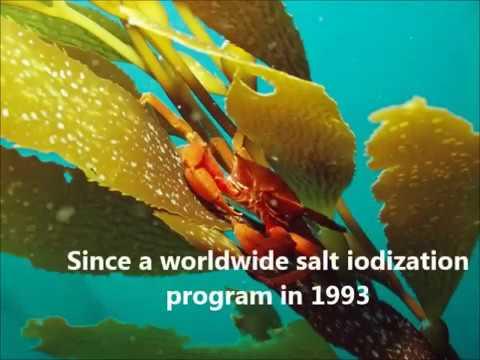 sea kelphealth benefits