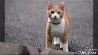 Самые знаменитые  коты и котята