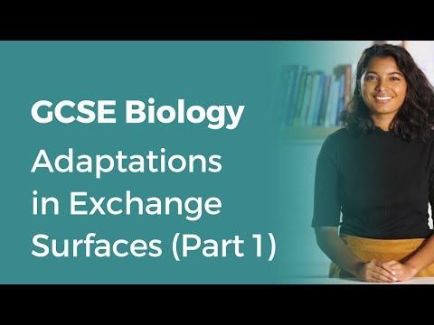 Adaptations in Exchange Surfaces (Part 1) | 9-1 GCSE Biology | OCR, AQA, Edexcel