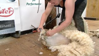 Ffeinal Pencampwriaeth Iau Worshipful | Worshipful Woolmen Final