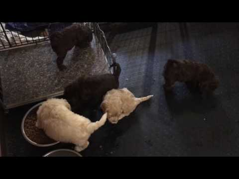Lizzie's pups discover mom's food bowl