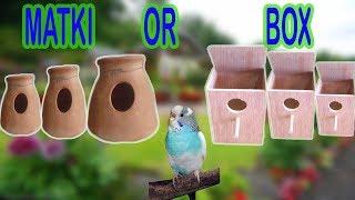 KIYA BOX MAIN BREED KARNE WALE BIRDS MATKI MAIN BREED KARTE HAIN ??? | URDU/HINDI