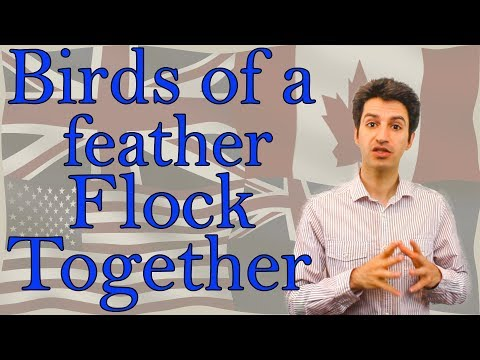 Birds Of A Feather Flock Together Youtube
