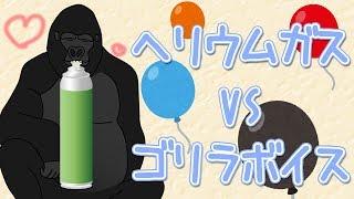【世界初?!】ヘリウムガスを吸って歌を歌うゴリラ