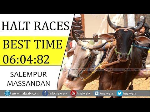 HALT RACES - BEST TIME 🔴 06:04:82 🔴 ਪਾਲਾ ਖਜੂਰਲਾ SALEMPUR MASSANDAN - 2019