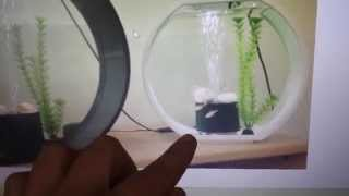 My Betta Fish - Update Nr 4 (new Tank For Grimm!)