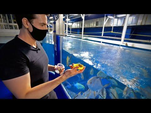 10,000,000 Litre Aquarium in Dubai Mall 🇦🇪