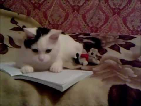 Черно-Белый Кот (Платон)