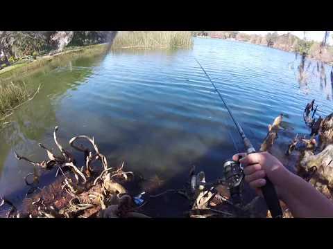 Fishing Lake Cherokee Downtown Orlando - Some Guy Wants My Fish