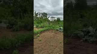 Réouverture des jardins ouvriers