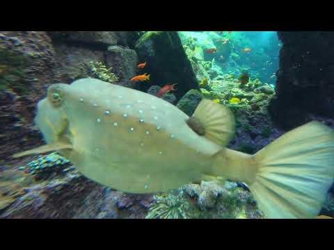Beautiful fishes from the Atlantis Lost Chambers – Palm Jumeriah Dubai