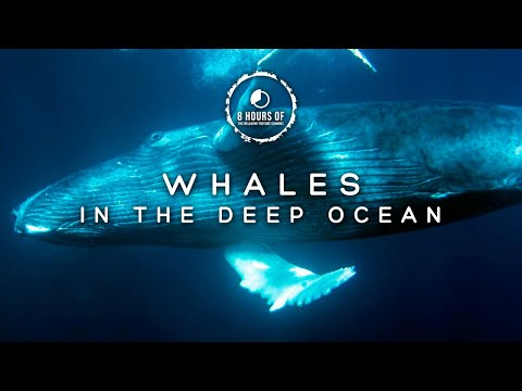 WHALE SOUNDS NO MUSIC Underwater whale sounds, Ocean whales singing noises for Sleeping Relaxing