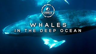 WHALE SOUNDS NO MUSIC, WHALES SINGING, WHALE SOUNDS, OCEAN UNDERWATER WHALE SLEEP FOR 8 HOURS