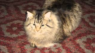 Памяти любимого кота Пушкина