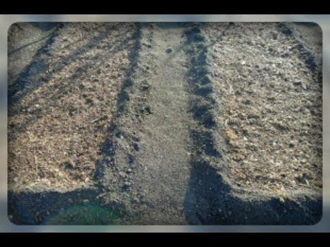 Готовим грядку для посадки чеснока | огородникам | дачникам | готовить | чеснока | сделать | чеснок | огород | грядку | грядка | когда