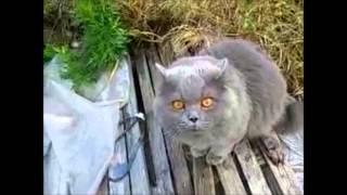 коты под валерьянкой | Cats and valerian root
