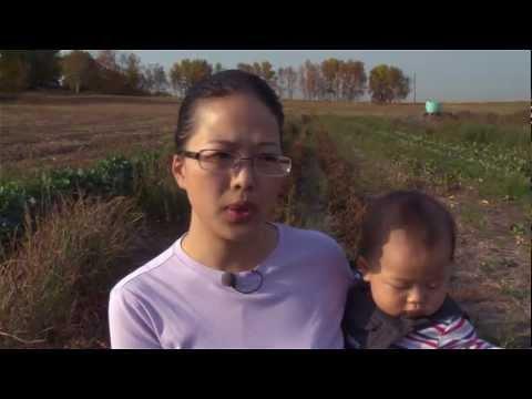 Market - Mhonpaj's Garden - A Family Owned Certified Organic Vegetable Farm