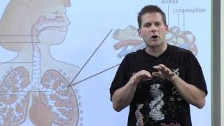 Biologi C - Fysiologi - Iltoptagelse i lungerne