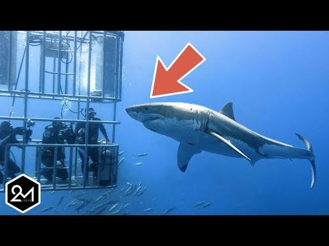 The Unbelievable Challenging Life Of A Shark Cage Diver