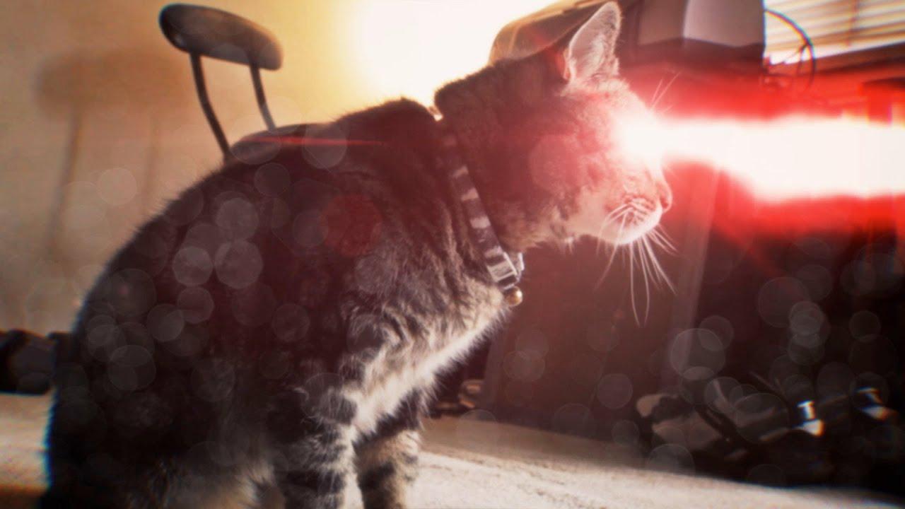 Кот лазер из глаз