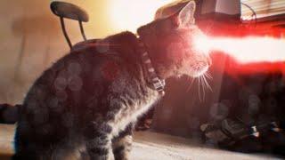 Repeat youtube video X-Men Origins: Cyclops Cat