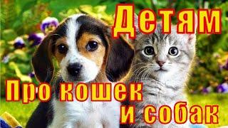 Интересные факты о кошках и собаках