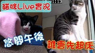 貓咪Live實況#2-兄妹的悠閒午後,看誰會先起床。