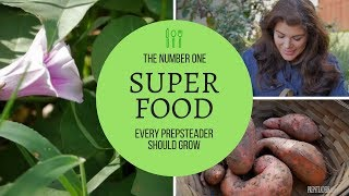The ONE SUPERFOOD every PREPSTEADER can grow...and should!