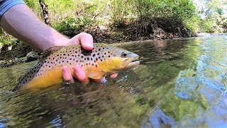 TROUT Fishing with Spinners in a CREEK