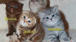 Смешные картинки про кошек и котят Выпуск №72  FUNNY CATS СМЕШНЫЕ КОШКИ
