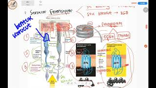 Kuliah Age-related Macular Degeneration - dr. Elvioza, SpM (K).