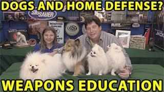 Are Dogs Good For Home Defense? White Pomeranian? Shetland Sheepdog? WeaponsEducation