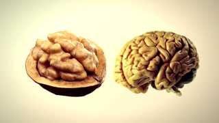 Овощи и фрукты похожие на наши органы