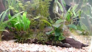 35l Aquarium (no.4)