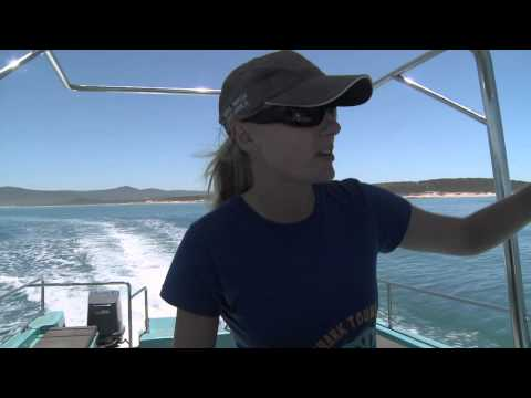 Dyer Island Conservation Trust Promotional Video