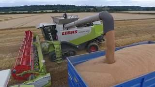 Wheat Harvest 2018 - Warwickshire UK