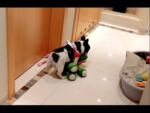 What Your Dog Does When Nobody Is Watching (Pixel in Hidden Camera)
